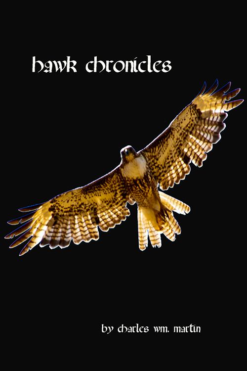 hawk chronicles_2