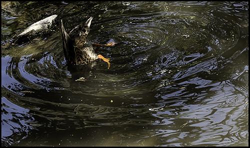 duck tales #1...