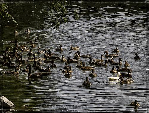 duck tales #2...