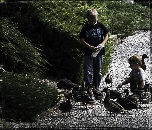 duck tales #3...