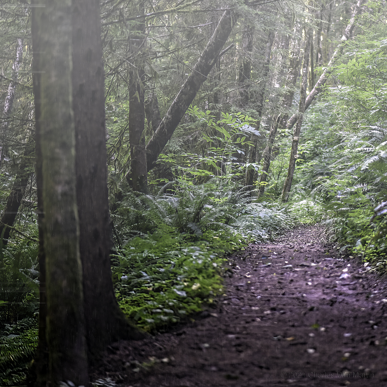 the surest path
